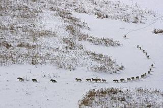 Ive got your back. wolves